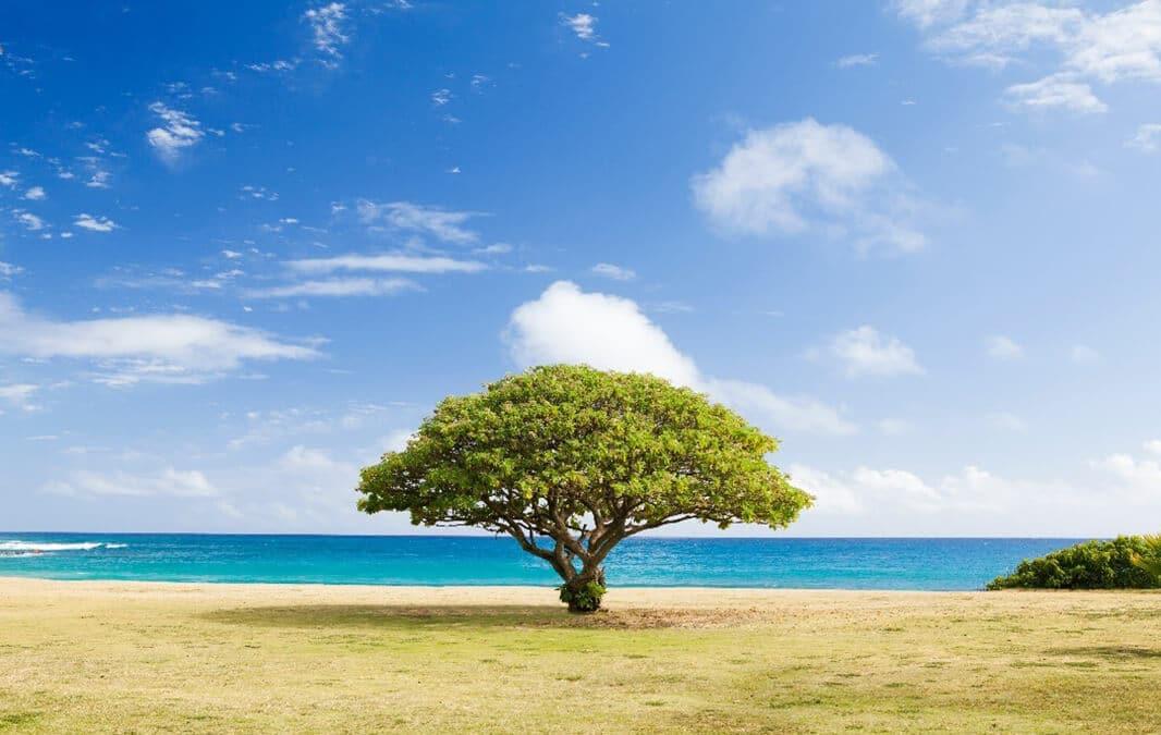 Single tee on a field overlooking the ocean