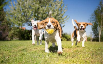 Garden Grove Dog Parks That You Need to Experience
